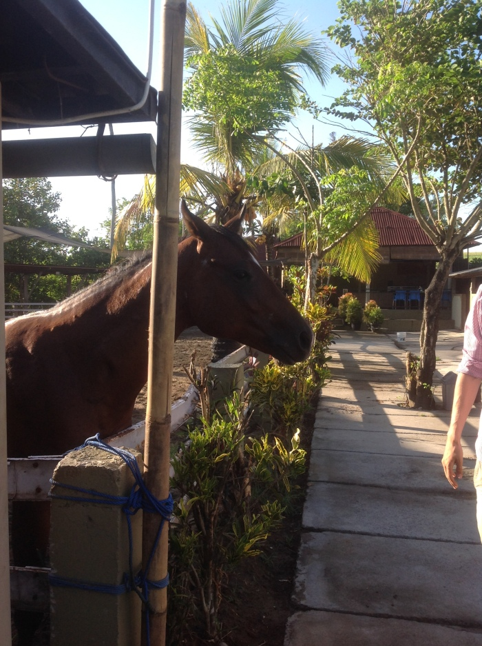 We tested for you Horse Riding at Yeh Gangga Beach, Bali.