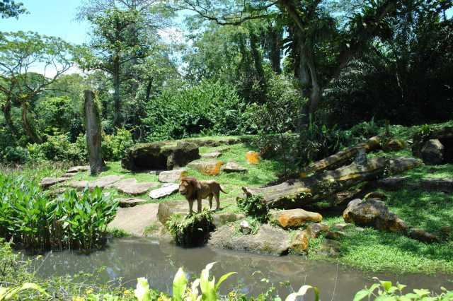 Singapore Zoo. Top 10 things to do in Singapore.