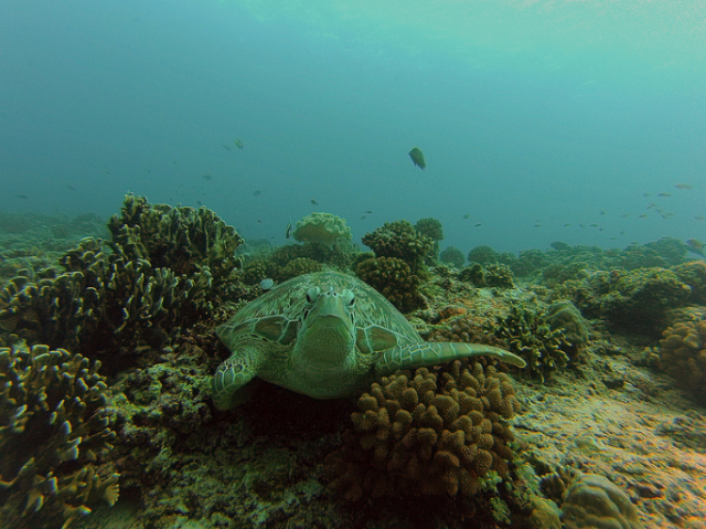 Diving, Things to in Gili Air. Picture by El Efante