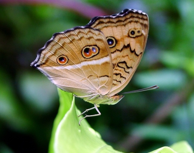 Things to do in Kuala Lumpur. Butterfly Park.