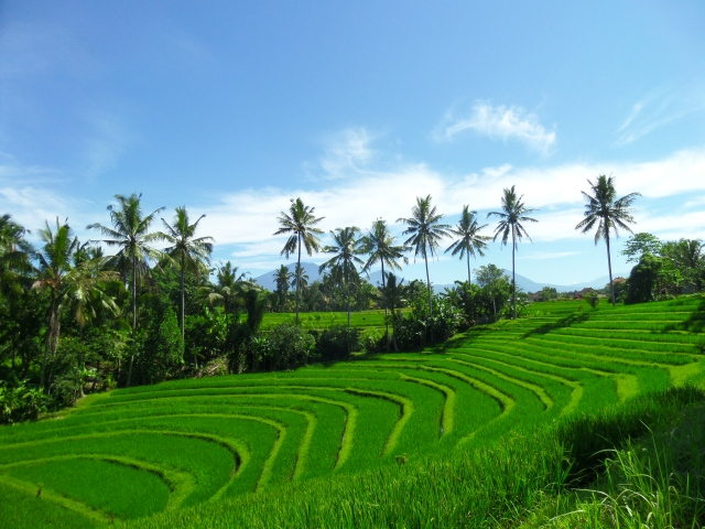 Trekking Rice Fields. Journey to the Secret Soul of Bali.