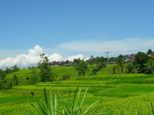 Trekking through the rice fields. Land Rover Journey To The Secret Soul Of Bali.