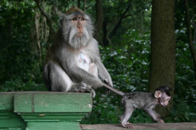 Monkey Forest. Top 10 things to do with kids in Bali.