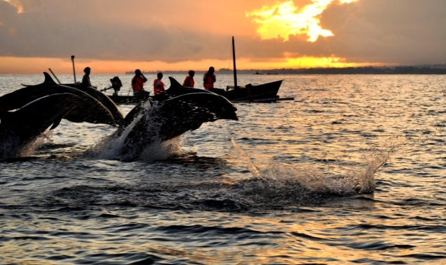 Dolphin Cruise. Top 10 Things to Do with Kids in Bali.