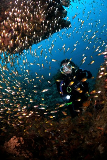 Top 10 Things to do in Lombok. Diving Sekotong.